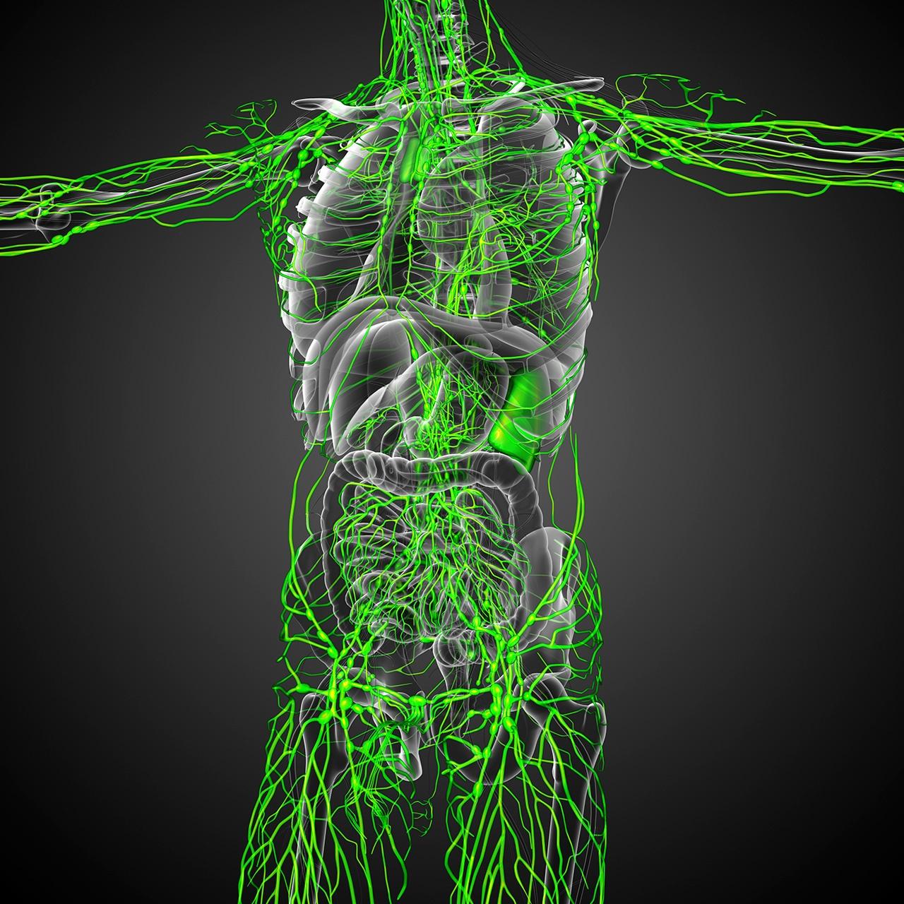 cancer-linfatico-interno.jpg