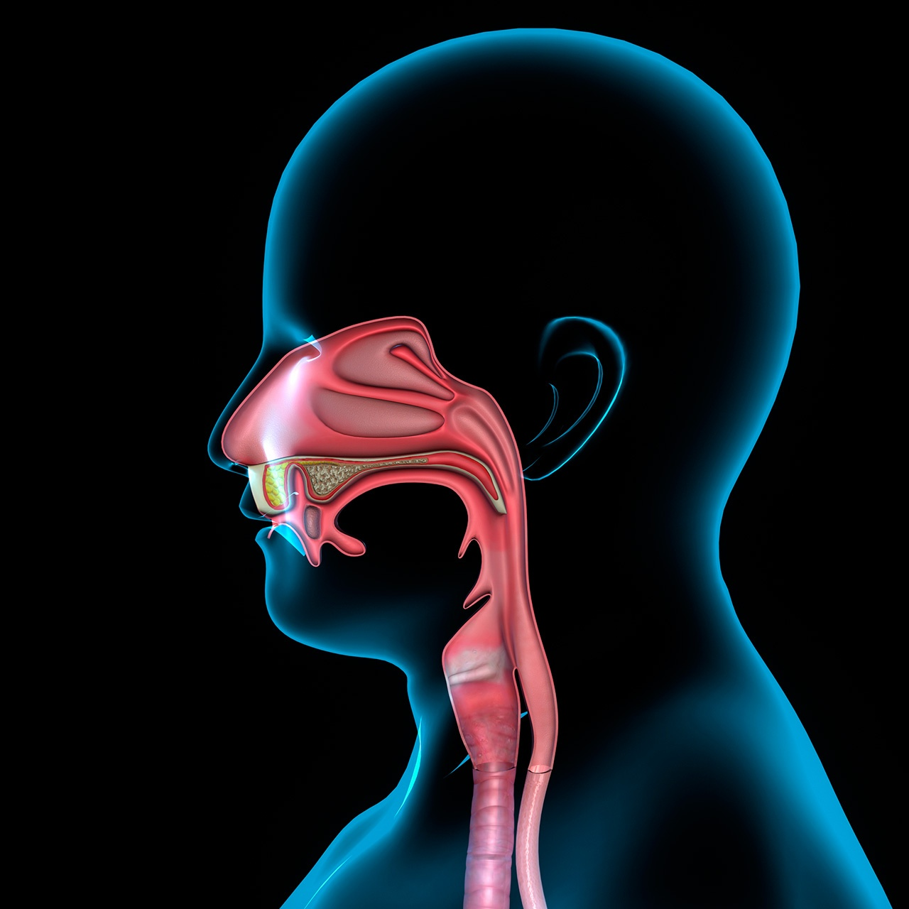 cancer-nasal-interno.jpg