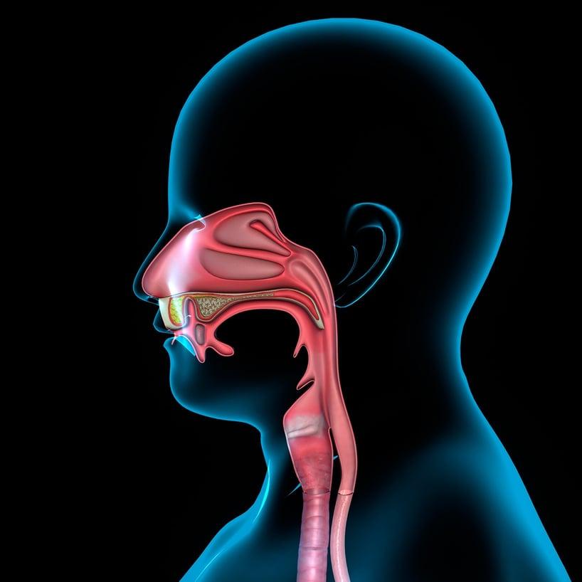 sistema respiratorio cabeza rayos x