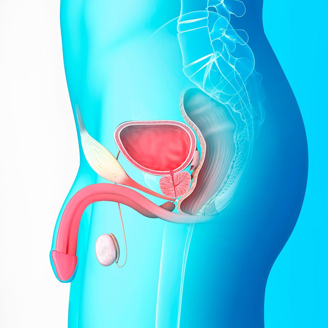cancer-testicular-oncosalud-prevencion.jpg