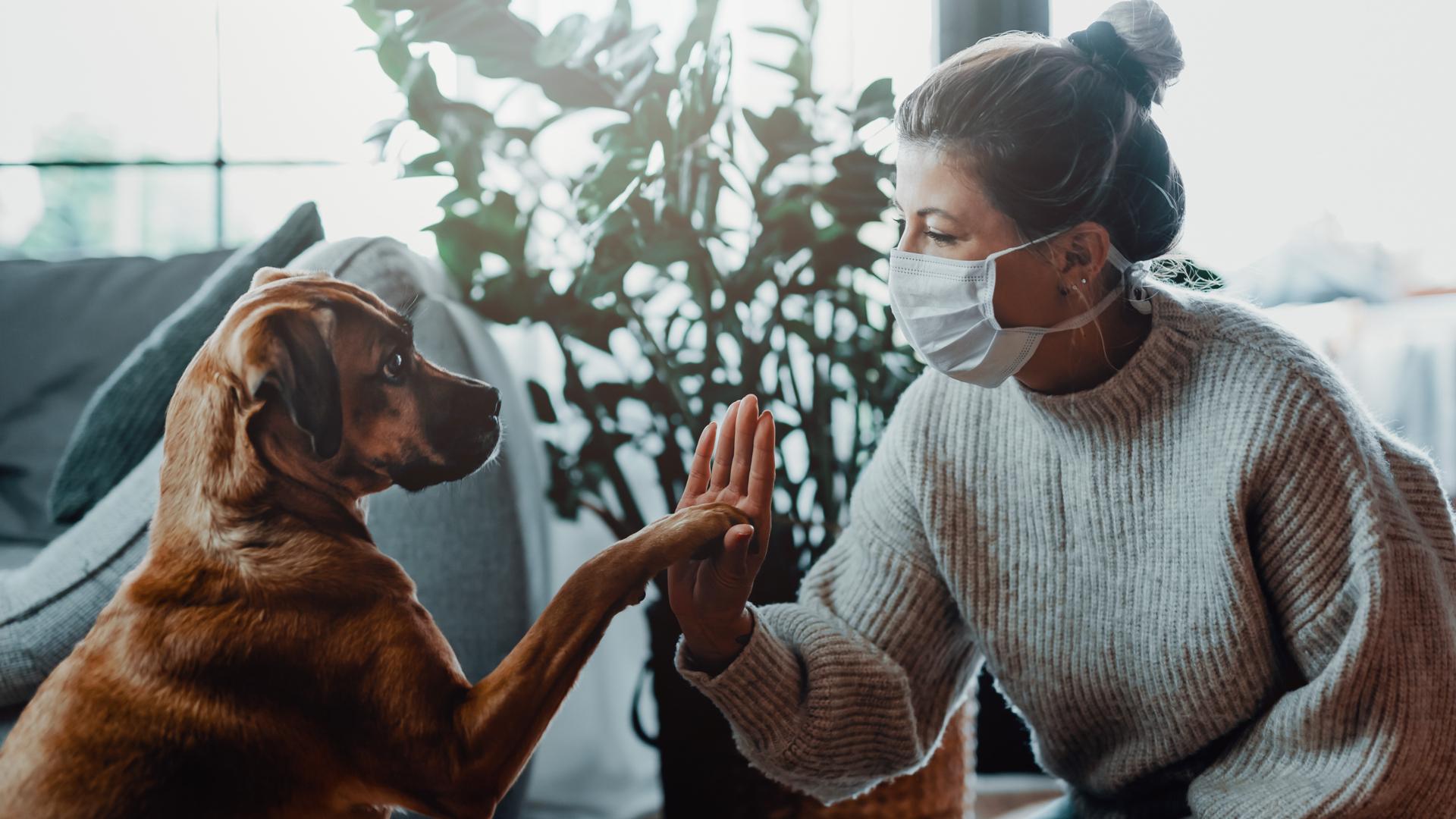 perro dando la mano a mujer
