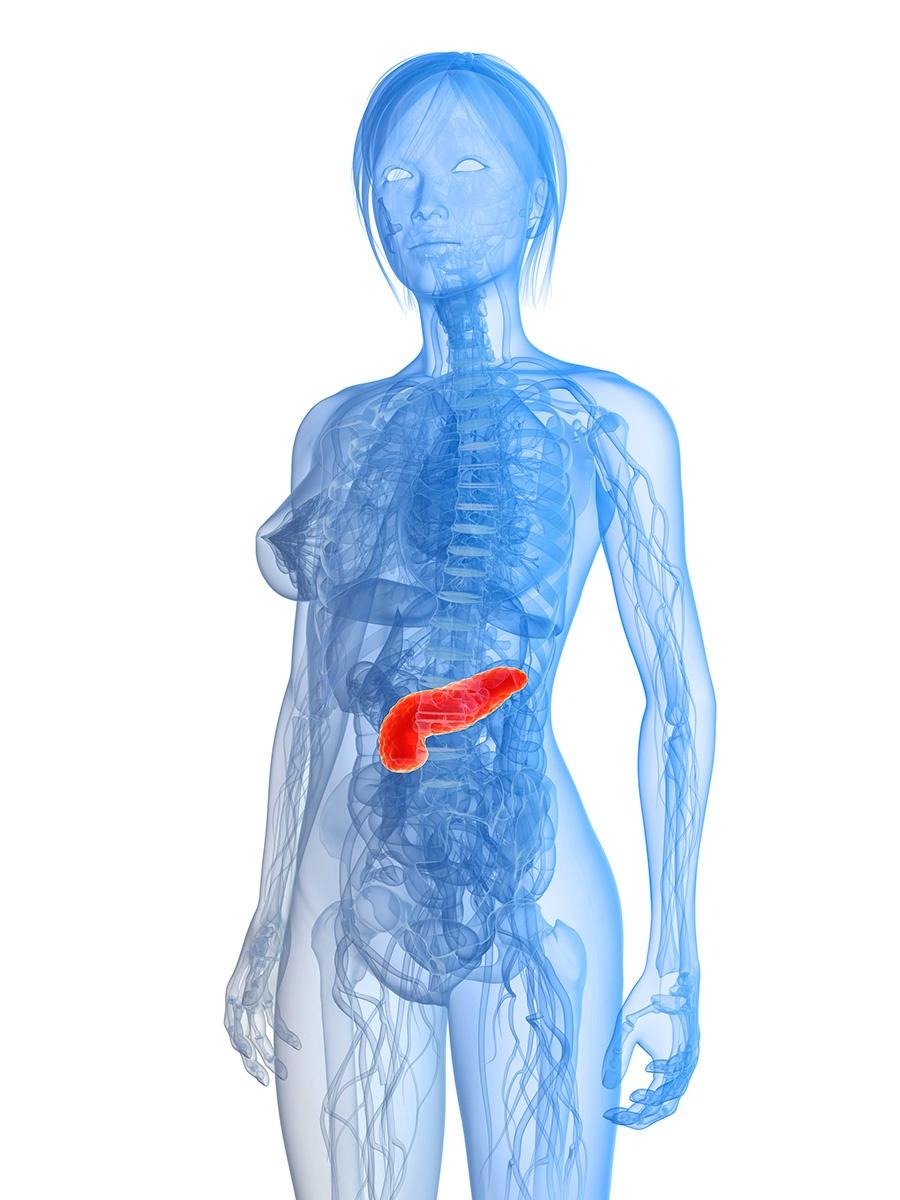 pancreas en un cuerpo femenino