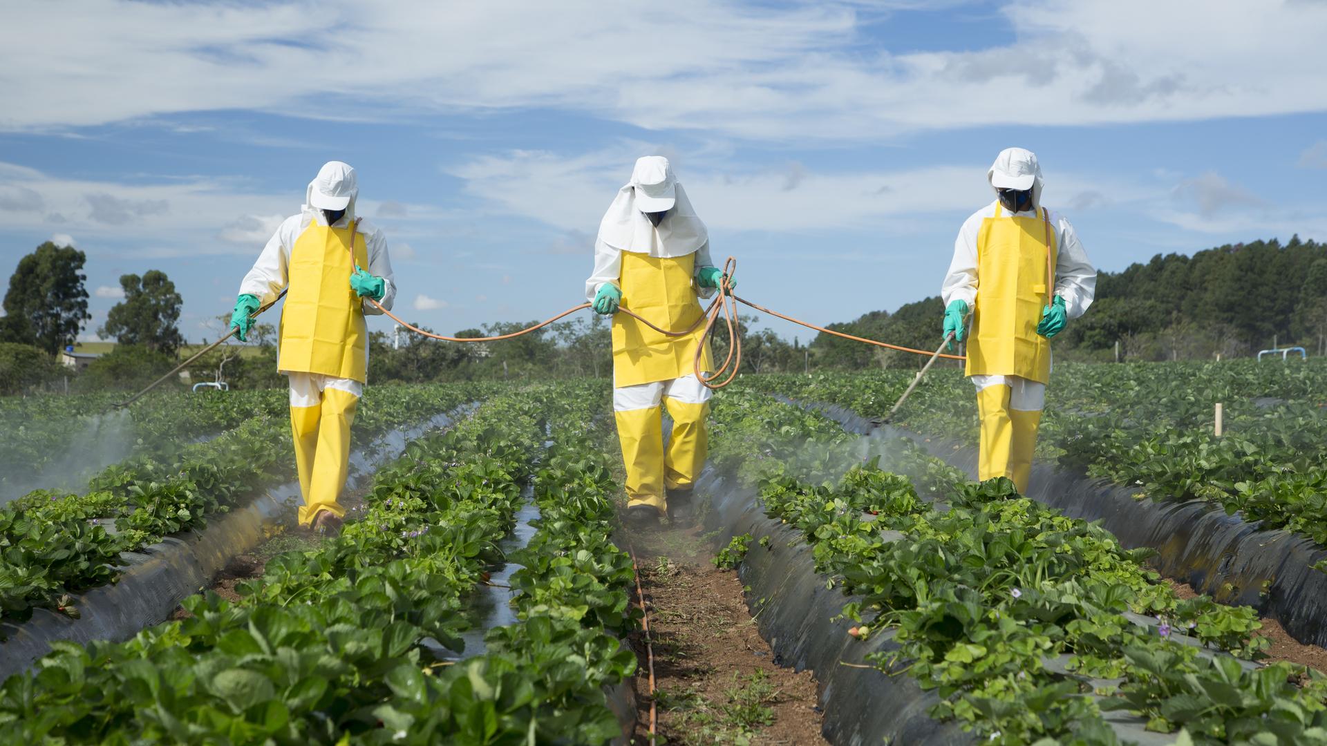 ¿Los pesticidas en los alimentos producen cáncer?